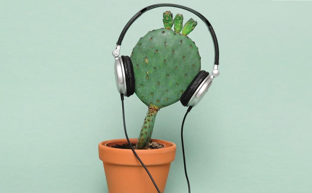 comunicarea cu plantele